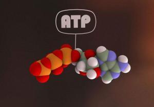 ATPB0007640